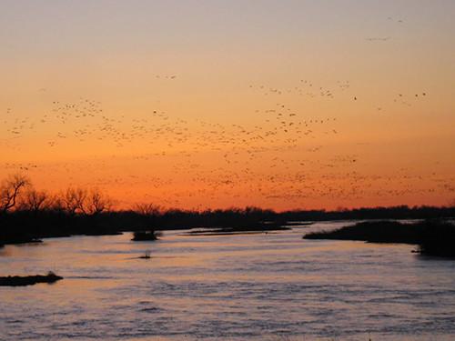 Photo 3  Sandhill Cranes